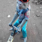 monkey_riding_bike